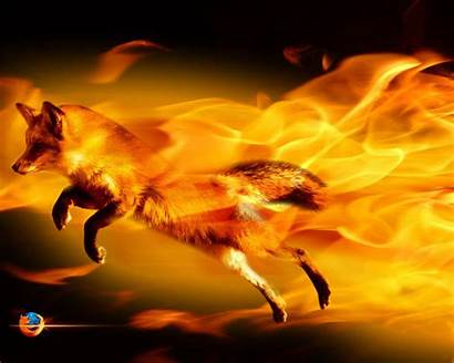Fox Cool Wallpapers Foxes Background Pc Fanpop