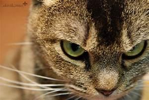 Bad Cat | Davi Kanno | Flickr