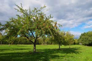 Apfelbaum Schneiden Wann : apfelbaum schneiden kosten preise ~ Watch28wear.com Haus und Dekorationen