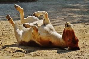 Donkey Animal Play Left  U00b7 Free Photo On Pixabay