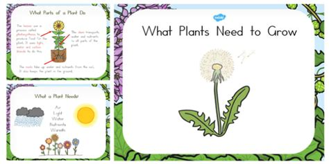 what plants need to grow powerpoint australia plant grow