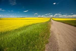 Scenic, Saskatchewan, Sunday, U2013, Fields, Of, Canola