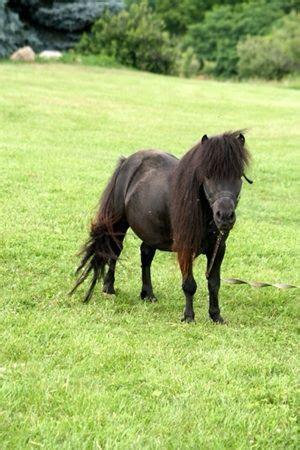fella bella stallion  sale upminster essex petshomes