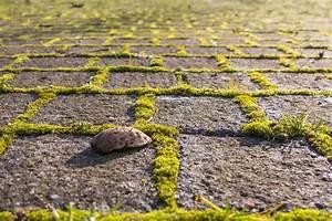 Moos Auf Gartenplatten Entfernen : moos entfernen so geht es ohne essig ~ Michelbontemps.com Haus und Dekorationen