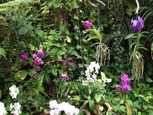 Luftwurzeln Bei Orchideen : loro parque orchideen bunt orchideen versenden ~ Frokenaadalensverden.com Haus und Dekorationen