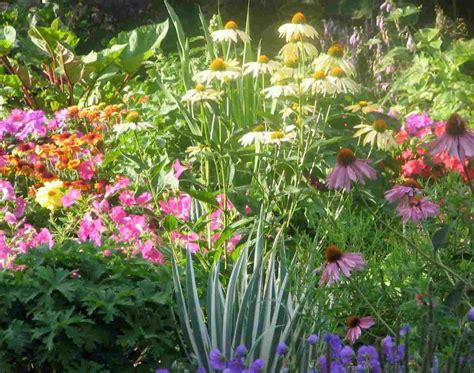 perrenial gardens paris perennials tripsetter inc