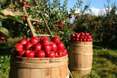 Free picture: fruit, leaf, nature, food, garden, apple ...