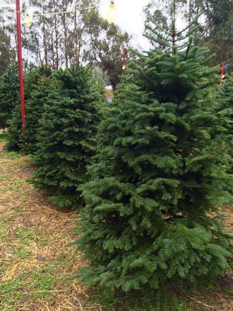 santa s tree farm in half moon bay santa s tree farm 78