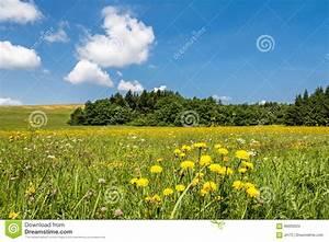 Wiese Mit Blumen : wiese mit gelben blumen wald und blauem himmel stockfoto ~ Watch28wear.com Haus und Dekorationen