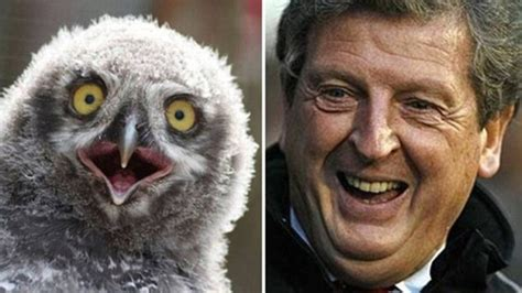 roy hodgson funny faces  photo video journal