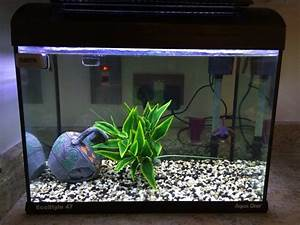 Aqua One Ecostyle 47 Fish Tank One Black Moor For Sale in ...