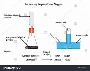 Fully Labelled Diagram Laboratory Preparation Oxygen Stock Vector 496287961