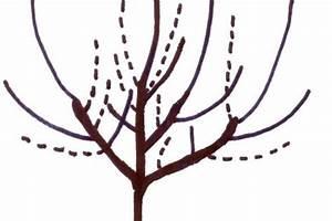 Apfelbaum Wann Schneiden : winterschnitt bei apfelb umen ~ Frokenaadalensverden.com Haus und Dekorationen