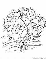 Peony Flowers Coloring Pages sketch template