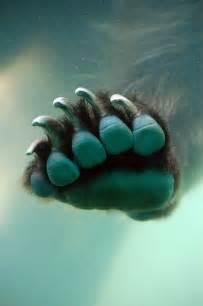 Underwater Bear Paw