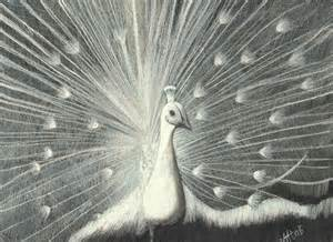 Pencil Drawing of White Peacocks Pictures