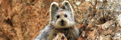 los  animales mas tiernos en peligro de extincion los