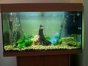 Aquarium L Form : juwel rio 120 community fish tank tropical fish site ~ Sanjose-hotels-ca.com Haus und Dekorationen