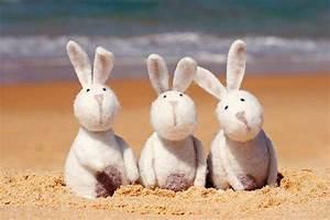 beach bunnies  ... Easter Beach Quotes