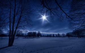 Landscapes nature winter snow trees night white moonlight ...