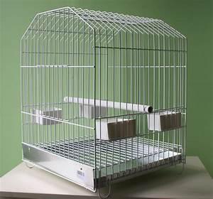 Cage A Perroquet : animal diffusion ~ Teatrodelosmanantiales.com Idées de Décoration