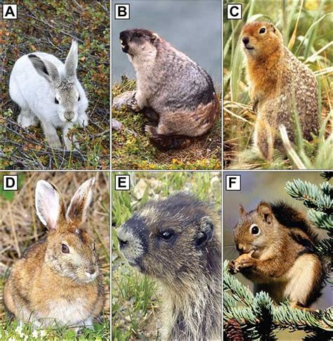 Small Mammals as Indicators of Climate Biodiversity and