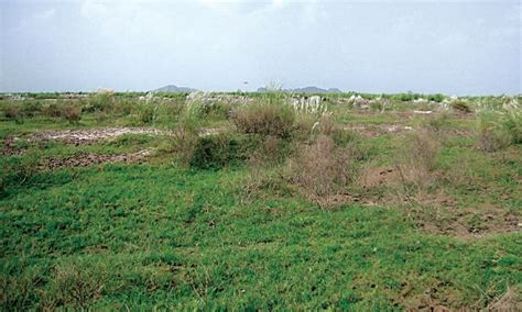 1,341 acres of barren land needs afforestation - Pakistan ...