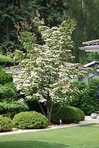 Bäume Für Balkon : b ume f r den garten frische haus ideen ~ Michelbontemps.com Haus und Dekorationen