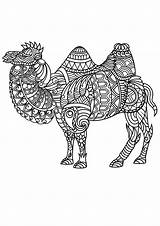 Coloring Mandala Pages Animal Camel Animals Adult Camels Zentangle Adults Drawing Patterns Pdf Complex Zoo Printable Nature Dromedaries sketch template