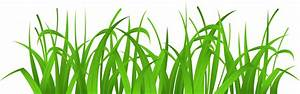 China grass clipart - Clipground