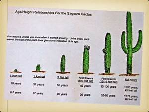 2 Year Old Growth Chart 2nd Saguaro