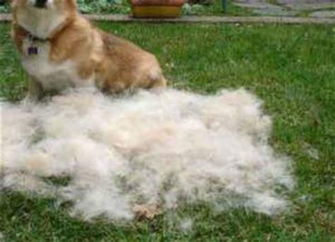dog shedding a lot what you can do aetapet com