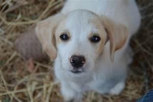 Hunde Aus Zentral Portugal : hunde aus zentral portugal adoptieren brenda ~ Lizthompson.info Haus und Dekorationen