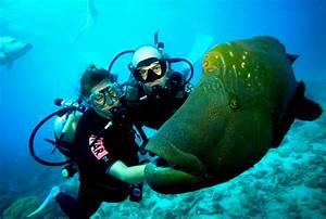 Scuba Diving Port Victoria Jetty Yorke Peninsula South Australia Australia