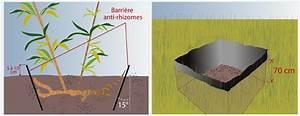 Barrière Anti Rhizome Castorama : planter des bambous dans son jardin jardinage ~ Dailycaller-alerts.com Idées de Décoration