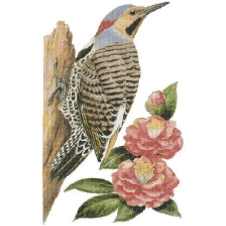 alabama state bird  flower yellowhammer woodpecker