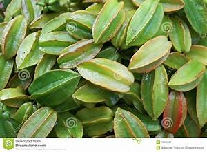 Green Indian vegetables stock image. Image of background ...