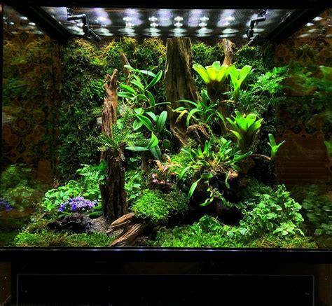 pin  cricket rose kenney  vivariums frog terrarium