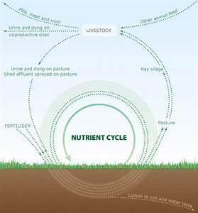Nutrient Cycle In Grazed Pasture  U2013 Fertiliser Industry
