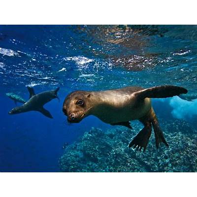 Galapagos Ecuador Best Family Trips - National Geographic