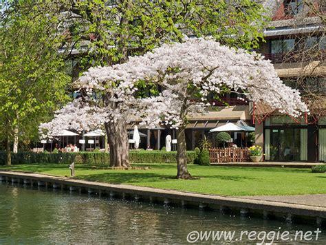 blossom tree photography