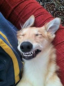Funny Dog Faces With Captions Web Gallery Pictures Of Cute ...