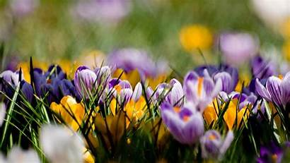 Spring Nature Flowers Wallpapers Purple Yellow 4k