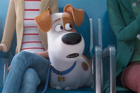 We can do our best to help them have interesting lives, have some it is incumbent upon us as responsible guardians to make sure the secret lives of our pets are fulfilling and happy. I Was Not Emotionally Prepared For 'The Secret Life of Pets 2'