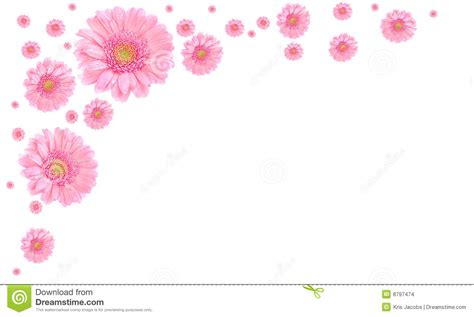 pink flower frame  white background stock photo image