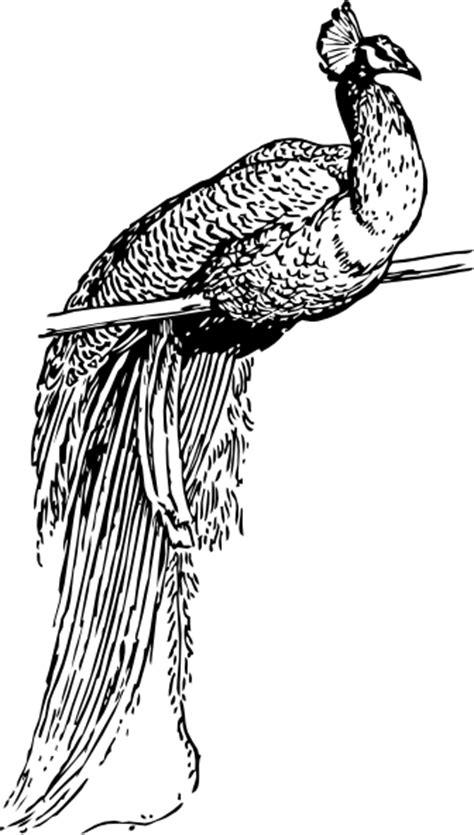 peacock clip art  clkercom vector clip art  royalty  public domain