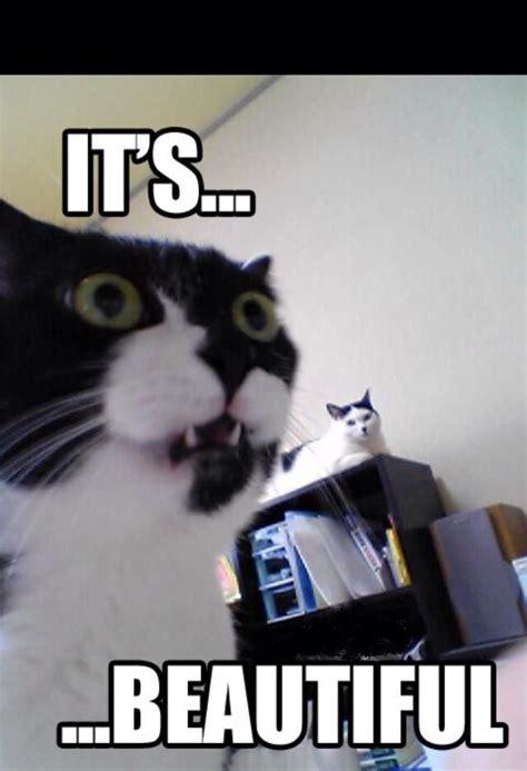 beautiful meme cat memes pinterest