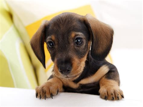 Too Cute Puppy Dogs Pinterest
