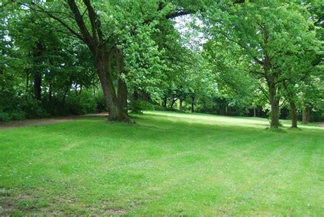 Tree, Grass, Lawn, Meadow, Flower, Green