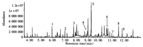 study   ketoadipic aciduria  gas chromatographic